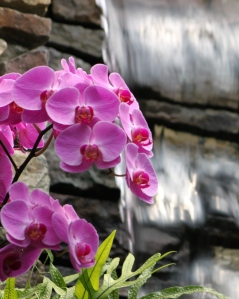 Waterfall & flower